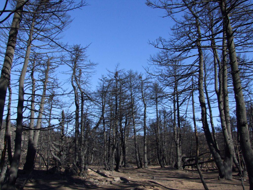 Η πρόληψη θα σώσει τα δάση μας -WWFΕλλάς